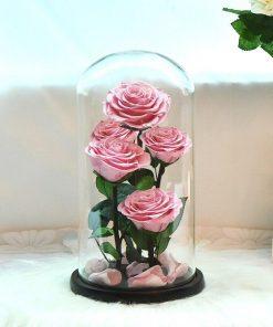Lot Rose Éternelle